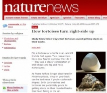 Nature reports on the paper